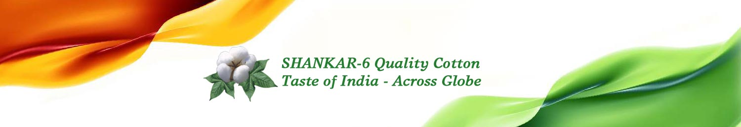 Sankar-6 best quality indian cotton, Sankar-6 Best Quality Indian Cotton | Taste of India - Across Globe